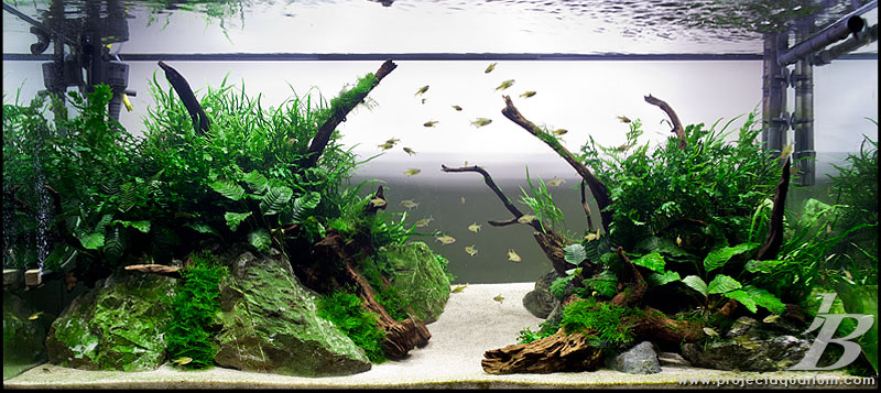 150cm 3rd rock genesis jason baliban aquascaping for Plante aquarium