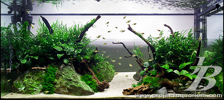 Planted Tank - Genesis - Filled