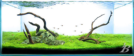Planted Aquarium - Hill of Skull - Jason Baliban