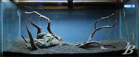 Planted Aquarium - Hill of Skull - Hardscape