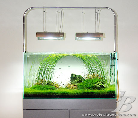 Planted Aquarium - Jason Baliban - Meander - Full Shot