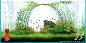 Planted Aquarium - Meander