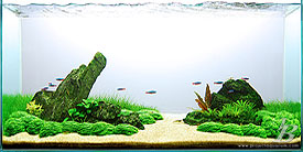 Planted Aquarium - Open