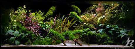 Planted Aquarium - Valley to the East - Dark Background
