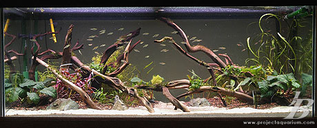 Planted Aquarium - Valley to the East - Filled