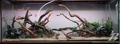 Planted Aquarium - Valley to the East - Planted