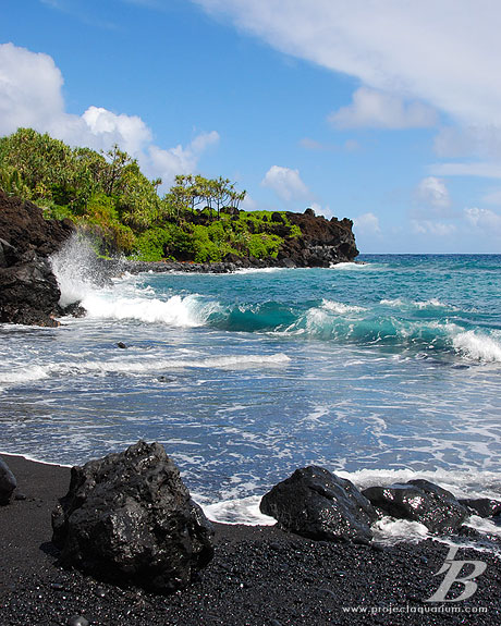 Planted Aquarium - Black Sand Beaches of Wainapanapa - Inspiration