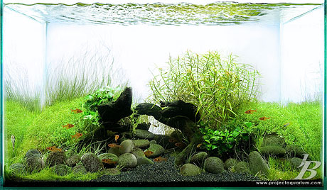 Planted Aquarium - Black Sand Beaches of Wainapanapa - Jason Baliban