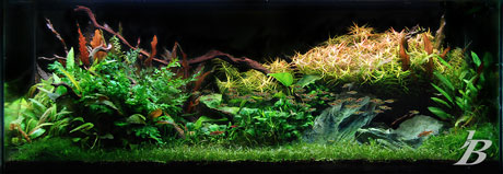 Planted Tank - Jason Baliban - Waiting