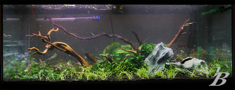 Planted Tank - Jason Baliban - Waiting - Filled