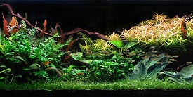 Planted Tank - Waiting