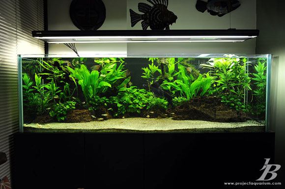 Planted aquarium tank portal planted aquarium article for Plante aquarium
