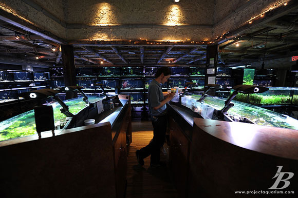 aquarium store houston high end aquarium store in the