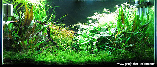 Planted Aquarium Photography with a Point and Shoot - Fluorescent