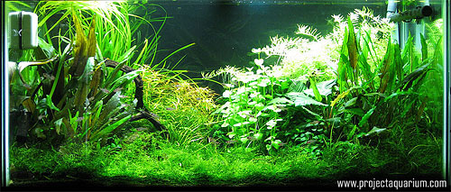Planted Aquarium Photography with a Point and Shoot - AWB