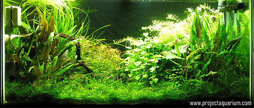 Planted Aquarium Photography with a Point and Shoot - Cloudy