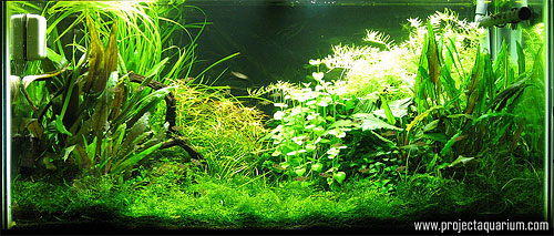 Planted Aquarium Photography with a Point and Shoot - Daylight