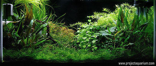 Planted Aquarium Photography with a Point and Shoot - Final SLR