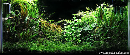 Planted Aquarium Photography with a Point and Shoot - Final