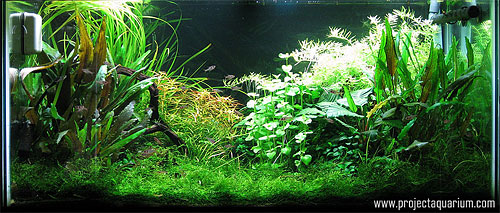 Planted Aquarium Photography with a Point and Shoot - Minus 1