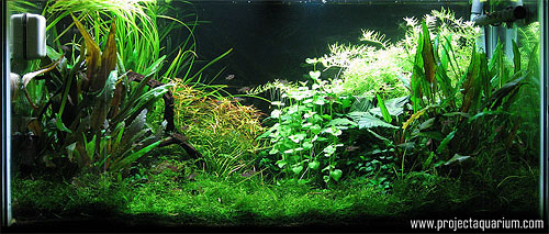 Planted Aquarium Photography with a Point and Shoot - Minus 2
