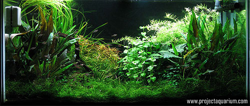 Planted Aquarium Photography with a Point and Shoot - Minus 3
