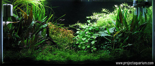 Planted Aquarium Photography with a Point and Shoot - Minus 4