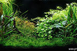 Planted Aquarium Photography with a Point and Shoot Camera