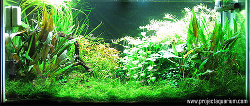 Planted Aquarium Photography with a Point and Shoot - Plus 1