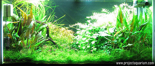 Planted Aquarium Photography with a Point and Shoot - Plus 2