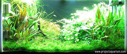 Planted Aquarium Photography with a Point and Shoot - Plus 3