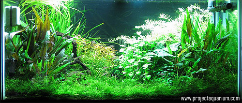 Planted Aquarium Photography with a Point and Shoot - Tungsten